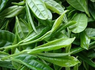 大悟绿茶1-1.jpg